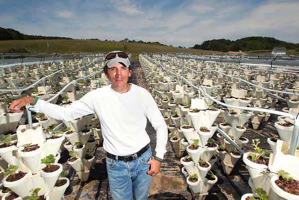 Record-Eagle/Keith King<br /> Mark Garrett stands among his hydroponic strawberries on Old Mission Peninsula.
