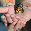 Record-Eagle/Jan-Michael Stump<br /> Rheanna and Joe Romeo hold a butterfly at the Greilickville Harbor Park Monday evening for a butterfly release to remember lost loved ones. The Grand Traverse Chapter of Compassionate Friends sponsored the event, which included several readings and the naming of those lost. The Romeos lost their 12-year-old daughter, Allee, earlier this month.
