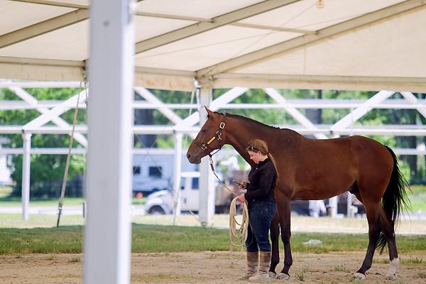 Equestrian Fest Set Up