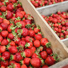 Record-Eagle/Keith King<br /> Strawberries are harvested Wednesday at Bardenhagen Berries in Leelanau County.