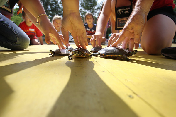 NCF TURTLE RACES