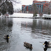 Record-Eagle/Glenn Puit<br /> Ducks swim in the Boardman River in dowtown Traverse City.