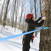 Record-Eagle/Keith King<br /> Gabriele Radeka, of Mancelona, places a tap adapter into a maple tree Tuesday, March 5, 2013 at the Martha Wagbo Farm and Education Center in East Jordan.