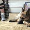 Record-Eagle/Jodee Taylor<br /> Trinity, Shari Cope's new service dog, rests at her feet.