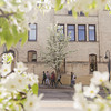 Record-Eagle/Keith King<br /> Pedestrians walk near blossoms on flowering pear trees in downtown Traverse City.