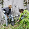 Record-Eagle/Keith King<br /> Joanie Woods, left, a board member with the Fishtown Preservation Society and a member of the Leelanau Conservancy's Wildflower Rescue group, and Liz Padalino, invasive species program coordinator with the Northwest Michigan Cooperative Management Area (CMA), remove garlic mustard plants in Leland's Fishtown.
