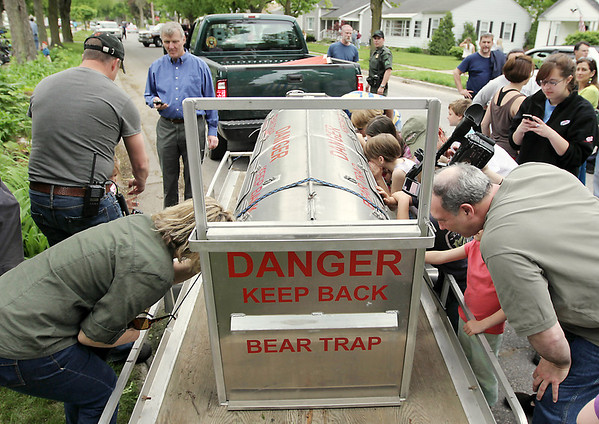 Record-Eagle/Keith King<br /> Onlookers try to catch a glimpse of a tranquilized bear after it is placed into a bear trap.