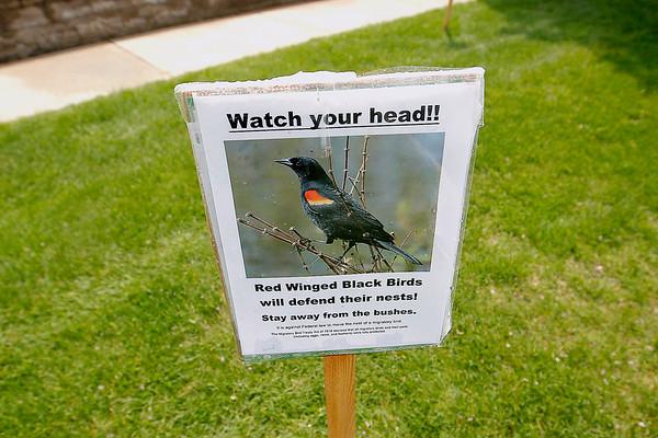 ATTACK BIRDS