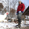 Record-Eagle/Nathan Payne<br /> Genevieve Pfisterer watches one Morganic Farms' turkeys in a pen on the 30-acre farm. Pfisterer and Stuart Kunkle have raised turkeys on the farm plot near Kingsley for a few years.