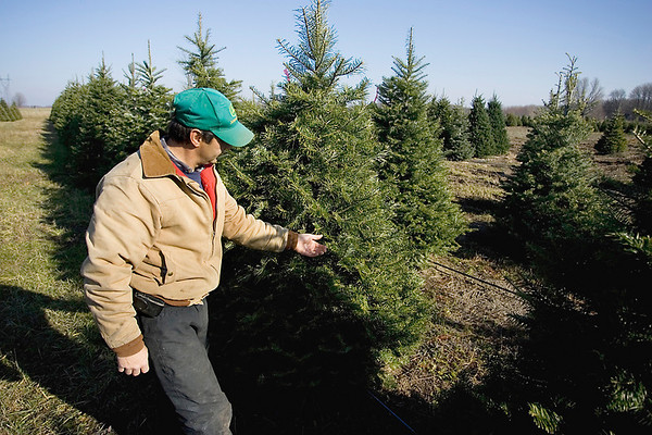 Record-Eagle/Keith King<br /> Ben Komrska, owner of Komrska Tree Farms, near Buckley, explains the characteristics of a Grand fir tree.
