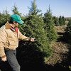 Record-Eagle/Keith King<br /> Ben Komrska, owner of Komrska Tree Farms, near Buckley, explains the characteristics of a Grand fir tree.