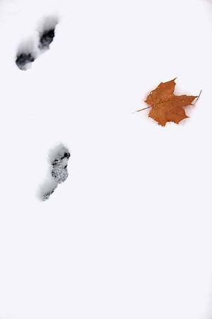 Spec Snow