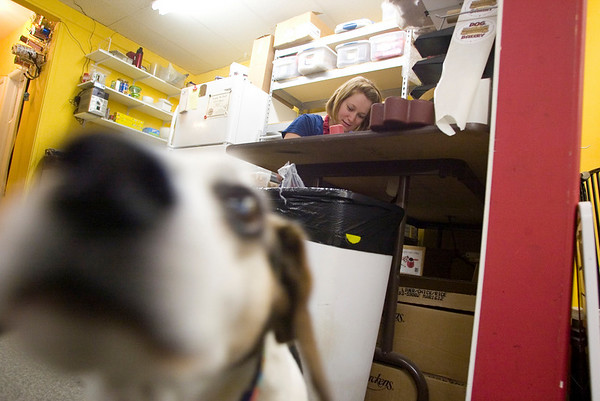 Record-Eagle/Jan-Michael Stump<br /> Lily Beery applies yogurt-based frosting to dog treats as Oscar patrols the bakery area at D.O.G. Bakery in Traverse City.