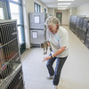 Record-Eagle/Keith King<br /> Cheryl Morgan, volunteer coordinator, returns a kitten Friday, October 11, 2013 after it was interacted with at the Cherryland Humane Society.