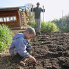 "Record-Eagle/Keith King<br /> Josiah Schaaf, 6, of Bear Lake Township, returns earthworms into soil while his father, Craig Schaaf, utilizes a u bar, or broad fork, to aerate a portion of his garden, or miniature farm, Wednesday, October 17, 2012 in Bear Lake Township. ""Most people wouldn't think it's that big but most people wouldn't understand how much food can come from a garden this small,"" Schaaf said. ""These days you have to talk in thousands of acres to impress someone,"" Schaaf said."