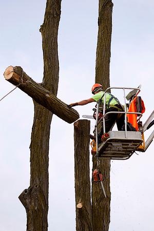 Spec Tree
