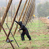 Record-Eagle/Glenn Puit<br /> Dan Wiesen, his brother Mike and hop farming expert Joe Brulotte work to set poles and wires at the Empire Orchards Hops Farm. The Wiesens are part of a trend toward small farms cashing in on a thriving hops market and huge demand from the beer brewing world.