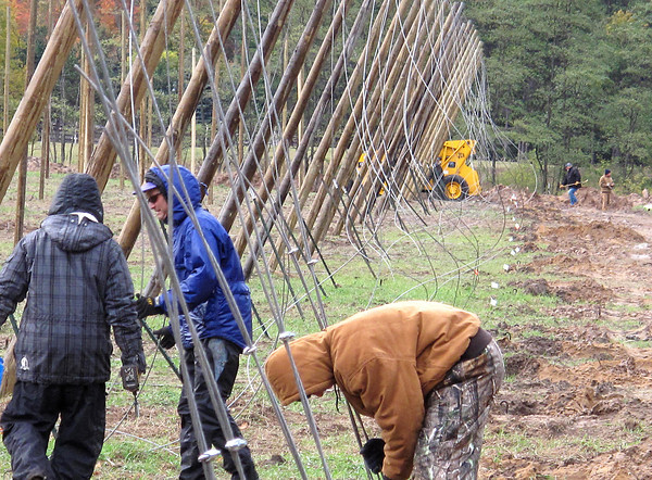 Record-Eagle/Glenn Puit Dan and Mike Wiesen, brothers who own Empire Orchards Hops Farm work alongside hops farming expert Joe Brulotte to set new poles at the farm. The Wiesens are among a growing number of farmers who've decided to cash in on a luc