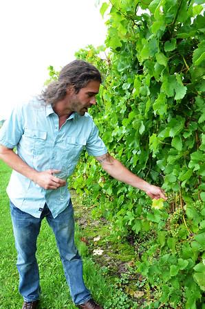 Record-Eagle/Allison Batdorff<br /> Shannon Walters examines pinot noir at Blustone Vineyards.