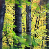 Record-Eagle/Jan-Michael Stump<br /> Fall color near Smith Lake Road in Kalkaska County.