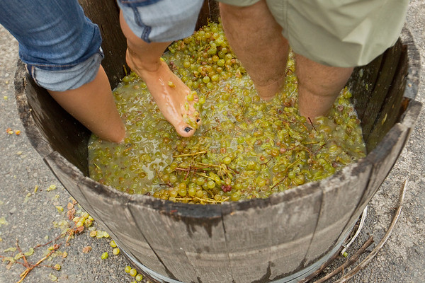 CHATEAU CHANTAL HARVEST DAY
