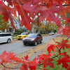 Record-Eagle/Keith King<br /> A vehicle travels past Autumn leaves Friday, October 18, 2013 on Seventh Street in Traverse City.