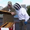 Beer Bees