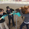 Record-Eagle/Keith King<br /> Doctor Tanja Molby, left, performs a dentistry procedure on a quarter horse as Bonnie Ascher, middle, Michigan State University College of Veterinary Medicine third-year student and Charlene Kolodziej, right, volunteer, of Traverse City, assist Saturday, September 29, 2012 during a free horse health care clinic at the Northwestern Michigan Fairgrounds in Blair Township.