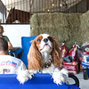 Horse Show Dogs