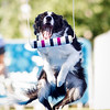 NCF AIR DOGS