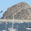 A look toward Morro Rock with boats anchored in Morro Bay.