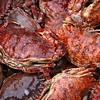 Rock Crab also being sold by a fisherman.