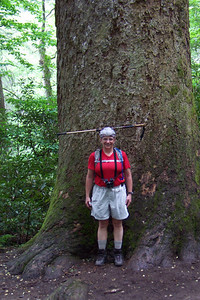 The trail had sections of old growth forest; this was one of the larger trees that managed to escape being logged.