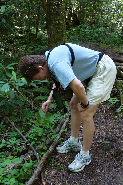 Patti discovers some Solomon's Seal and lifts the stalk to inspect it more carefully.