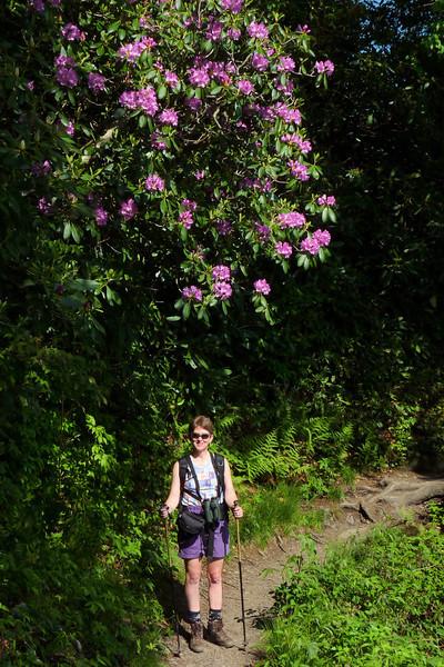 Patti enjoys another splendid rhododendron specimen.