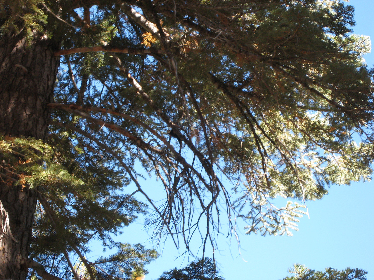 Oh...can you see the woodpecker?  Yeah... bad pic.