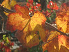 Autumn colors... a rare sight in Ca.