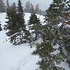 So instead of heading out to Pear Lake... we decided to venture out to Kirkwood on Thurs.  Tahoe got hit hard with this snow, while Sequoia got a dusting in comparison.  <br /> <br /> Here's Miley doing what he does best... getting stuck in a treewell.