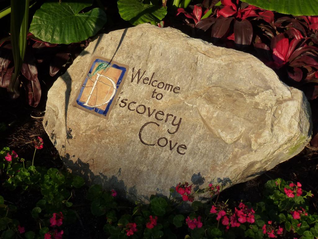 Discovery Cove (Orlando, Fl)