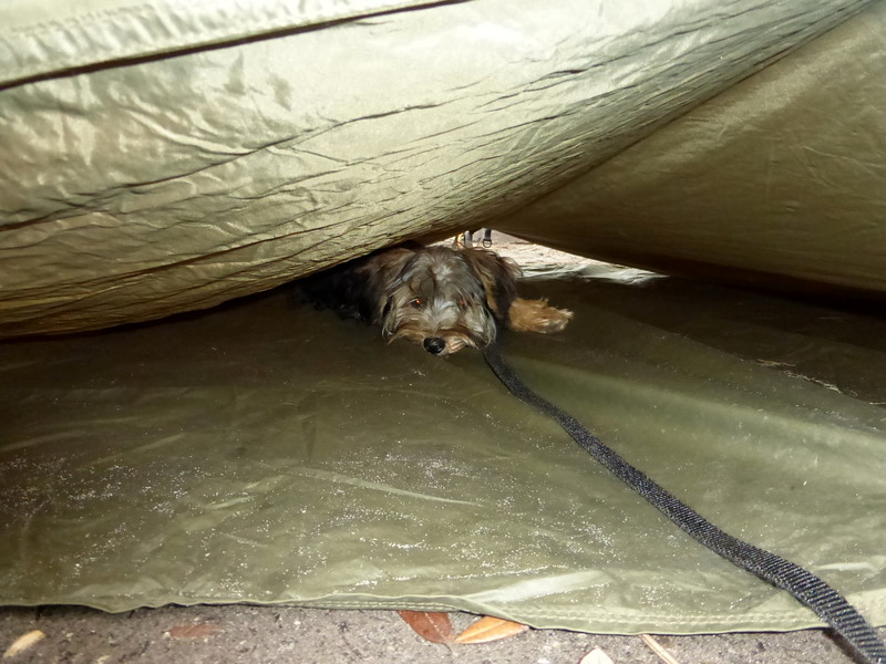 Hiding Under the Tent