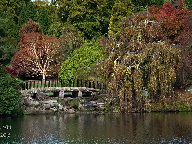 Tree Bridge Tree