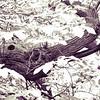 wooden mamoth