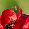 Nectar hunt