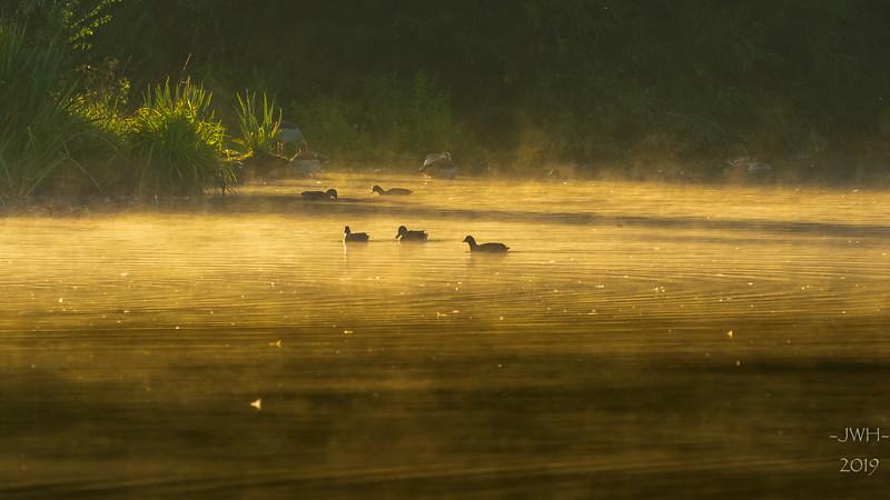 Breakfast in the mist