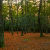 All quiet in the beach woods, Monopod and long exposure, a tripod would be better!