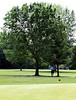 A player chips from under a tree during the Saginaw District Golf Association Tournament qualifier Sunday at Green Acres Golf Course, Bridgeport.