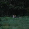 One of the many deer we saw in Mohican Country