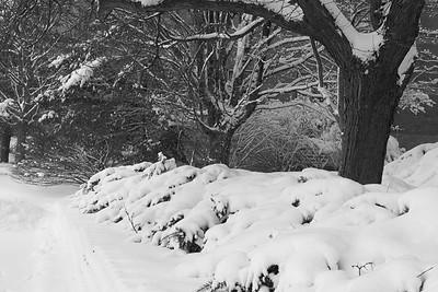 winter-1201