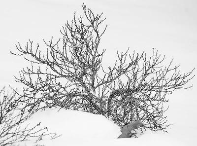 winter_scene-5350
