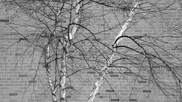 winter_scene-5347